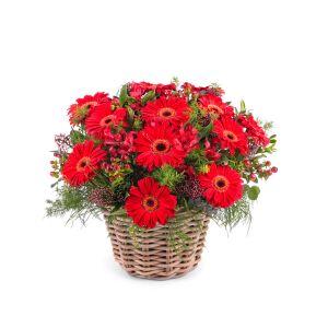 Basket Arrangement of Gerbera Daisies